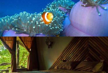 Akciový potápačský balík Andamánske more, Thajsko