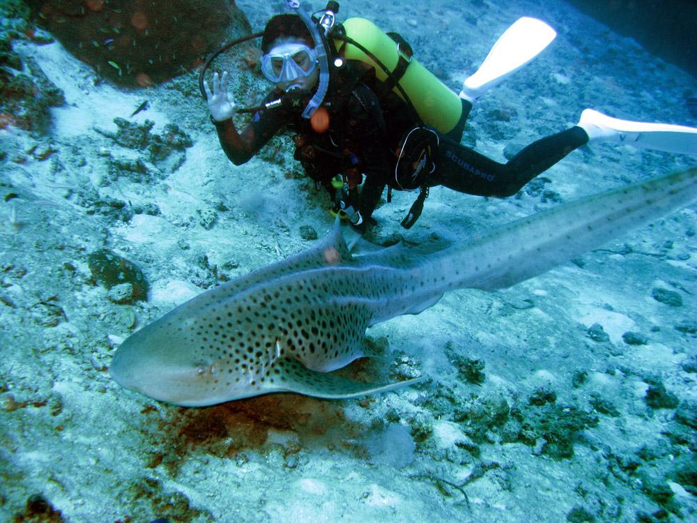 Shark point diving, Thailand